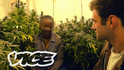 High Society: Weed