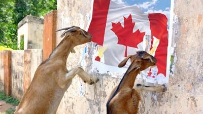 Români din Canada mi-au povestit de ce n-ai nicio șansă să te muți acolo, indiferent de vize