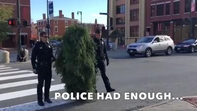 Läuft ein Baum über den Zebrastreifen und wird verhaftet