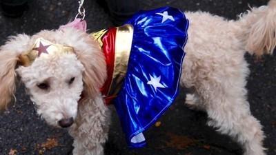 Fotos de perritos disfrazados en un desfile de Halloween