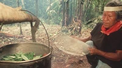 L'altra faccia della popolarità dell'ayahuasca