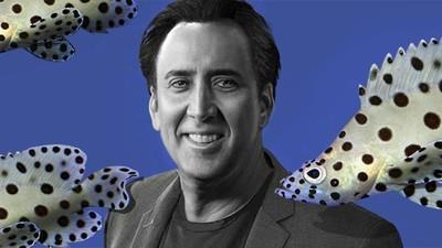 Entrevistamos a Nicolas Cage usando sólo citas de sus películas