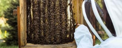 S českým včelařením je něco v nepořádku