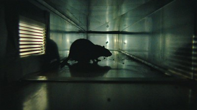 Morgan Spurlock's New Documentary About Rats Is as Horrifying as It Sounds
