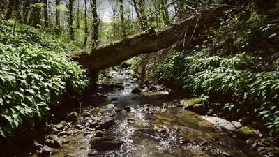Les, který simuluje globální oteplování