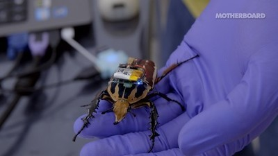 Meet the Cyborg Beetles, Real Insects That Are Controlled Like Robots