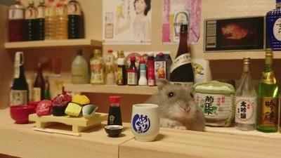 Hamsterii ăștia stau în apartamente mai frumoase decât al tău