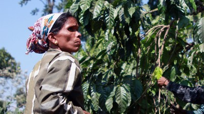 The Rise of India's Coffee Revolution