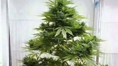 Το Καλύτερο Χριστουγεννιάτικο Δέντρο το Έχει η ΕΛ.ΑΣ.