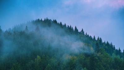 How Romania Is Using Satellites to Stop Loggers Leveling Its Fairytale Forests