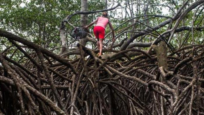 The Dangerous Lives of Colombian Mangrove Clam Collectors