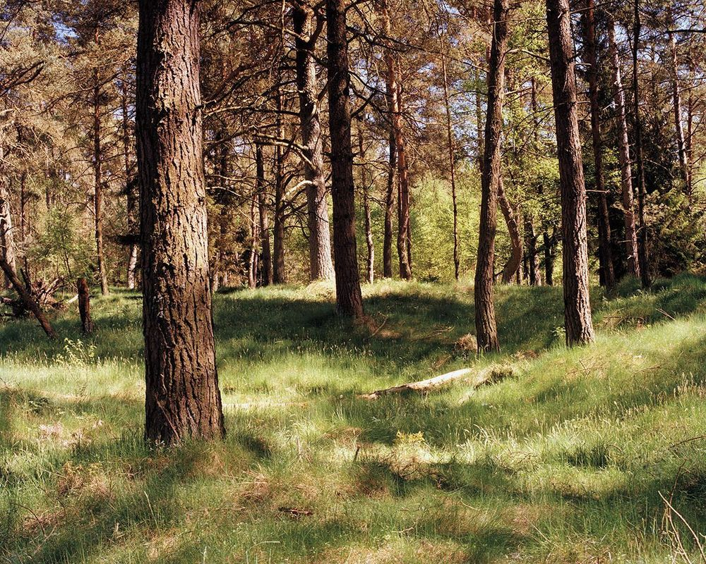 Tip: Behind the piece of wood on the ground, near the second tree to the right in the center of the image.