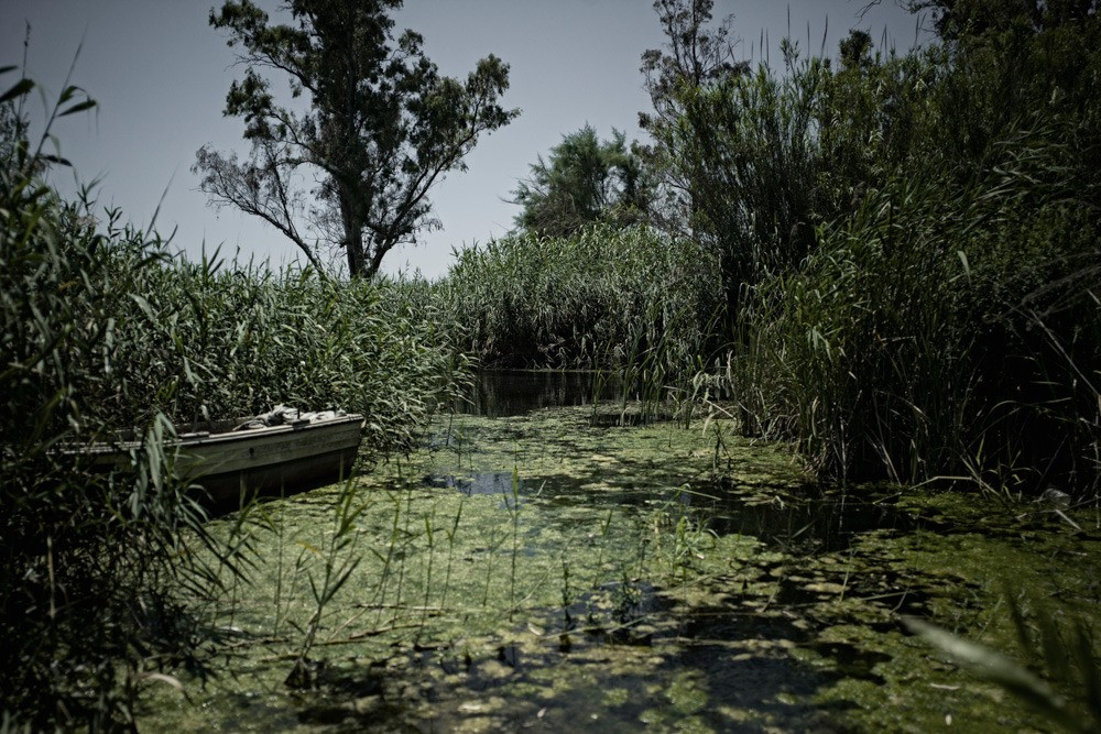 Diseases that were treated and eliminated decades ago in the Western world reappeared in Greece in 2012. Cases of malaria have been recorded in Evros and Scala. It is the result of spending cuts on things like insect pesticides.