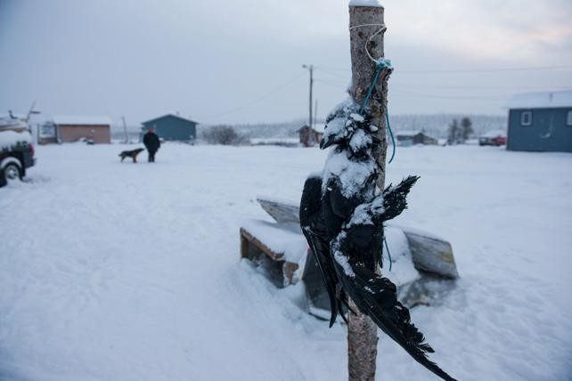 A dead raven hangs on a post outside of a doghouse, a warning to other ravens to stay away from the dog's food.